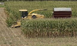 Milho sendo colhido em Coatsville, Maryland. O milho dos Estados Unidos está novamente no radar dos fabricantes de ração da União Europeia, com compradores podendo escolher diante da oferta global abundante, enquanto a Ucrânia, importante exportador, lida com problemas de transporte devido ao seu rigoroso inverno. 30/08/2013 REUTERS/Gary Cameron