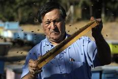 Un apicultor con un panal en Putaendo, Chile, abr 18 2011. La economía chilena mantuvo el pie en el freno durante diciembre y concluyó el 2013 con un crecimiento del 4,0 por ciento, lo que confirma la desaceleración de la actividad y apuntala expectativas de un recorte en la tasa de interés referencial este mes. REUTERS/Ivan Alvarado