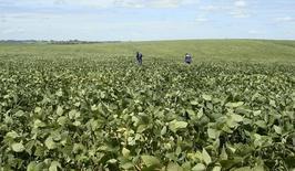 Os agronomistas Gomes e Meneghin inspecionam soja para estimar a safra deste ano, em Cruz Alta, no Rio Grande do Sul. A produção de fertilizantes no Brasil somou 9,30 milhões de toneladas em 2013, queda de 4,3 por cento na comparação com 2012, atingindo o nível mais baixo desde 2009, informou a Associação Nacional para Difusão de Adubos (Anda). 29/02/2008 REUTERS/Inae Riveras