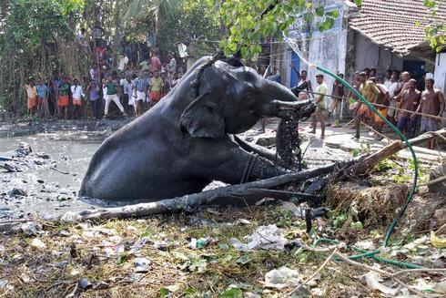 Elephant rescue operation