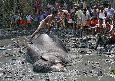 Elephant rescue operation