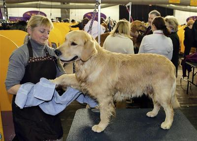 Westminster Kennel Club to choose top dog in New York