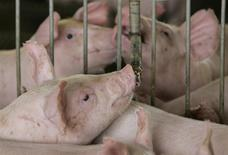 Un cerdo bebiendo agua en una granja en Lucas do Rio Verde, Brasil, feb 28 2008. Rusia planea reanudar en marzo la importación de cerdo de Brasil y Estados Unidos para compensar la caída de suministros de la Unión Europea, dijo el miércoles el servicio veterinario y fitosanitario de Rusia (VPSS, por sus siglas en inglés). REUTERS/Paulo Whitaker