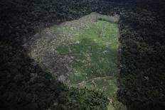 Un trozo de selva deforestada en Uruara, Brasil, abr 22 2013. Un nuevo sistema de vigilancia online hará posible que se compruebe rápidamente el estado de los bosques tropicales de todo el mundo que antes no estaban sometidos a vigilancia, lo que posiblemente aumente la presión sobre los gobiernos para luchar contra la deforestación. REUTERS/Nacho Doce