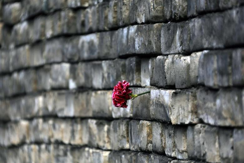 A carnation is placed by mourners onto a barricade in Kiev's Independent Square February 24, 2014. REUTERS/Yannis Behrakis