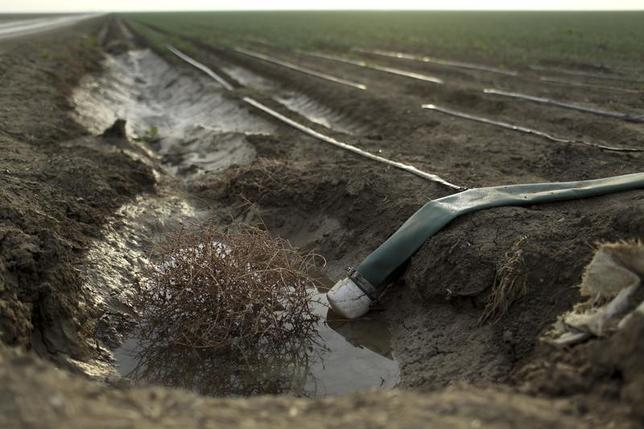 A tumbleweed is seen at an irrigation channel on a farm near Cantua Creek, California February 14, 2014. REUTERS/Robert Galbraith