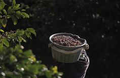 Un joven transporta una cesta cargada con café recién recolectado en San Isidro de Alajuela, Costa Rica, ene 8 2013. Un déficit global de al menos 2 millones de bolsas de 60 kilogramos se espera para el ciclo 2014-2015, dijo el director ejecutivo Roberio Oliveira Silva de la Organización Internacional del Café (OIC) a periodistas el viernes. REUTERS/Juan Carlos Ulate