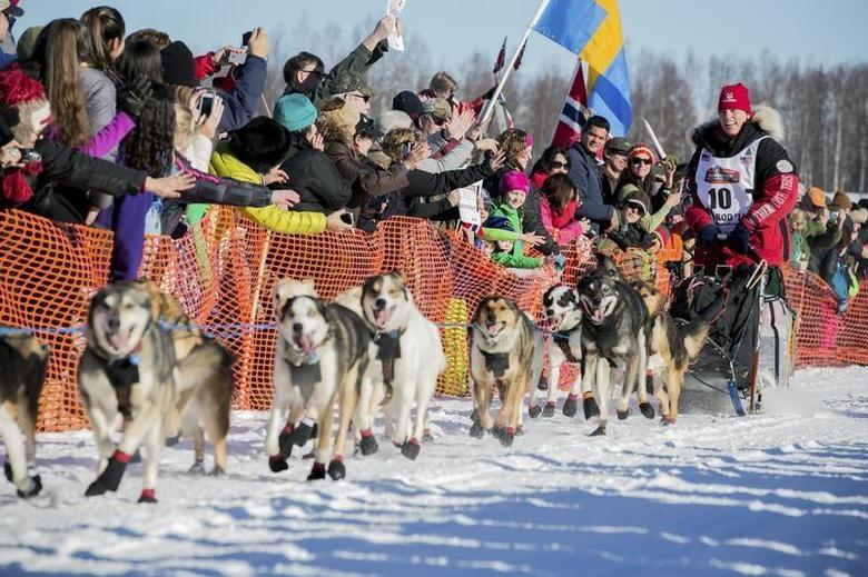 Last year's second place winner Aliy Zirkle greets fans out of the start gate at the official restart of the Iditarod dog sled race in Willow, Alaska, March 2, 2014. REUTERS/Nathaniel Wilder