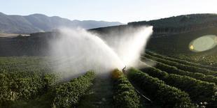 Pés de café são irrigados em uma fazenda em Santo Antônio do Jardim. Os contratos futuros de café arábica na bolsa de Nova York subiram mais de 2 por cento nesta terça-feira, atingindo nova máxima de dois anos, e o açúcar pairou perto de um pico de quatro meses, em meio a preocupações com a seca no principal produtor global das duas commodities. 07/02/2014 REUTERS/Paulo Whitaker