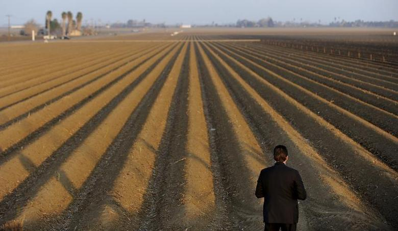 A sercret service agent looks over a farm field as President Barack Obama speaks to the media on California's drought situation in Los Banos, California February 14, 2014 file photo. REUTERS/Wally Skalij/Los Angeles Times/Pool