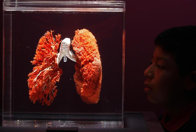 A visitor looks at plastinated lungs during ''Bodies: The Exhibition'', an international exhibition, by Gunther Von Hagens in Lima in this June 24, 2009 file photo. REUTERS/Pilar Olivares/Files