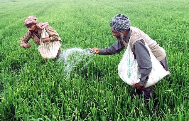 Farmers sprinkle fertilizer on their wheat crop in Ropar in Punjab in this January 28, 2003 file photo.