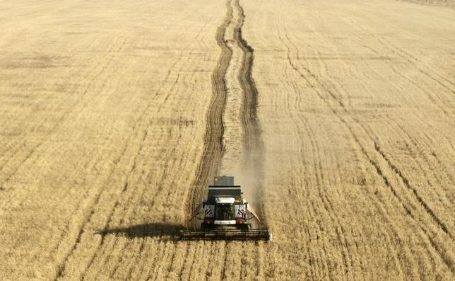 An aerial view shows a combine harvesting wheat in a field near the village of Divnoye, some 190 km (118 miles) northeast of Stavropol in southern Russia, July 4, 2013. REUTERS/Eduard Korniyenko