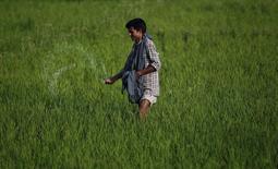 Кашмирский фермер разбрасывает удобрения на рисовом поле близ города Сринагар 22 июня 2011 года. Индия - один из ключевых рынков для российского калийного монополиста Уралкалия - сократила субсидии фермерам на закупки калийных удобрений почти на 20 процентов в начинающемся с апреля финансовом году, чтобы сдержать разбухание бюджетного дефицита, сказали Рейтер источники в правительстве и отрасли. REUTERS/Fayaz Kabli