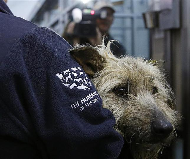 One of the ten dogs transported from Sochi, Russia is brought into the Washington Animal Rescue League (WARL) in Washington March 27, 2014. REUTERS/Gary Cameron