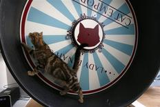 A cat uses a wheel at Lady Dinah's Cat Emporium in London March 28, 2014. REUTERS/Stefan Wermuth