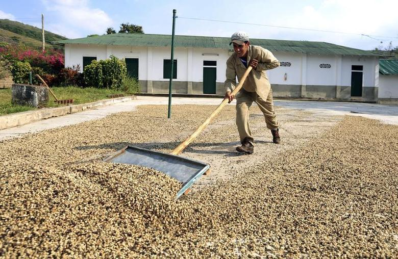 A worker collects coffee beans after being dried at a farm of the National Coffee Growers Federation in Pueblo Bello, northern Cesar province January 29, 2014. REUTERS/Jose Miguel Gomez