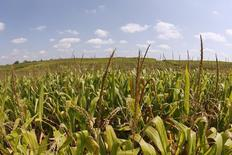 Monsanto publie mercredi un bénéfice trimestriel supérieur au consensus, à la faveur de l'expansion mondiale de ses activités dans le maïs et le soja. Le leader mondial des semences a dégagé un bénéfice de 1,67 milliard de dollars au deuxième trimestre clos le 28 février, contre 1,48 milliard (2,74 dollars) un an auparavant. /Photo d'archives/REUTERS/John Sommers II