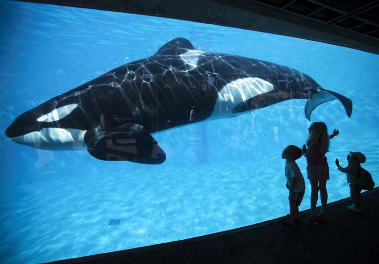 Children get a close-up view of an Orca killer whale during a visit to the animal theme park Sea World in San Diego, California, in this March 19, 2014 file photo. REUTERS/Mike Blake/Files