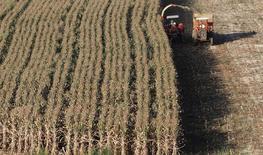 Plantação de milho em Santo Antônio do Jardim, município do Estado de São Paulo, no mês de fevereiro. Indústrias brasileiras consumidoras de milho têm encontrado dificuldade de fechar novas compras do cereal, apesar da colheita em andamento no país. 07/02/2014 REUTERS/Paulo Whitaker