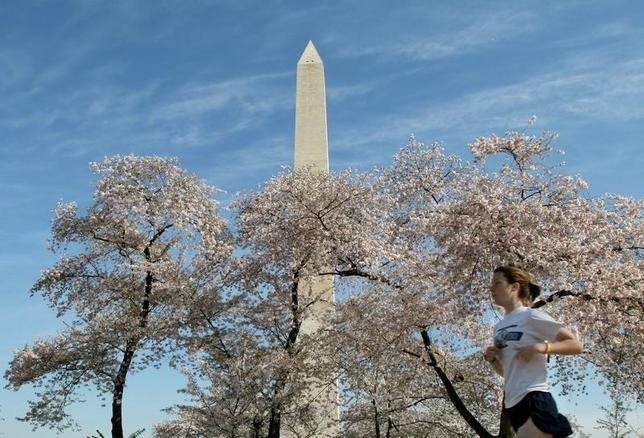 The Washington Monument looms above blooming cherry blossoms and a jogger, out for an early morning run near the tidal basin in Washington, April 11, 2005. REUTERS/Gregg Newton