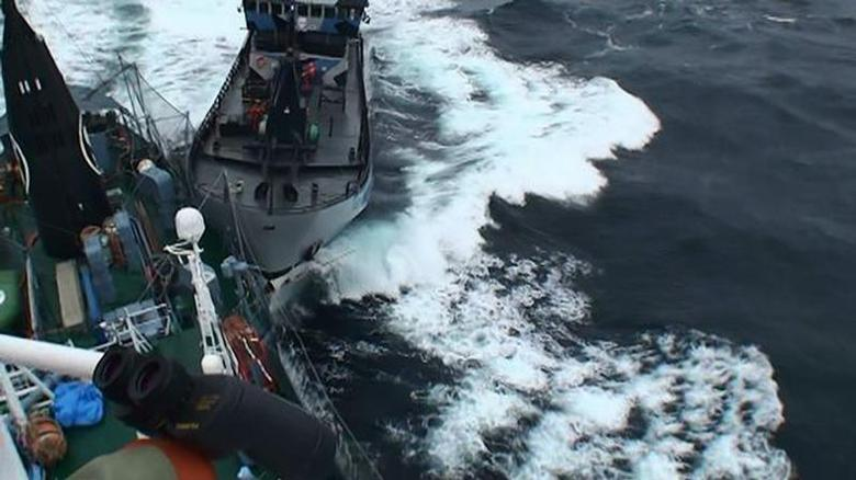 Sea Shepherd vessel ''The Bob Barker'' is pictured in contact with the port side stern of Japanese whaling ship Yushin Maru in the Southern Ocean in this February 2, 2014 handout photo by the Institute of Cetacean Research. REUTERS/Institute of Cetacean Research/Handout via Reuters