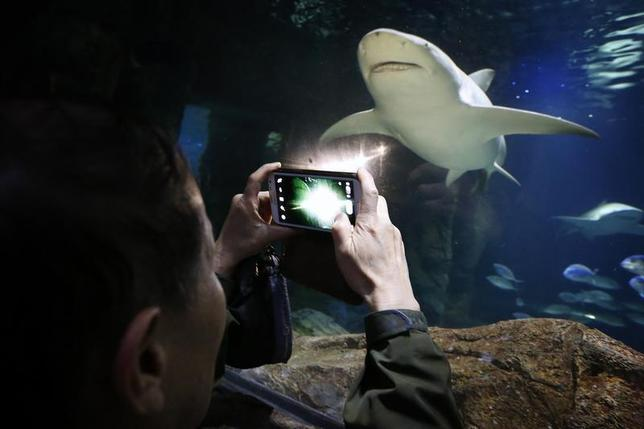 A Chinese tourist takes a photograph of a shark swimming towards him at the Sydney Aquarium April 9, 2014. REUTERS/David Gray