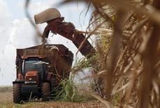 Cana é colhida em Calimete, em Cuba. Um ritmo mais forte no consumo mundial de açúcar e problemas na produção do Brasil poderão levar o mercado global da commodity a um déficit em 2014/15, revertendo superavits vistos desde 2011, previu nesta terça-feira a consultoria Datagro. 17/12/2011 REUTERS/Enrique de la Osa