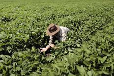 Produtor inspeciona sua lavoura de soja que está sendo alvo de lagartas, em Barreiras, na Bahia, em fevereiro. 06/02/2014 REUTERS/Ueslei Marcelino