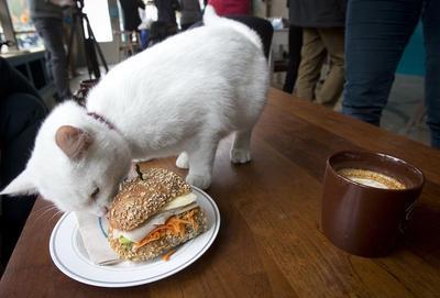 NY cat cafe