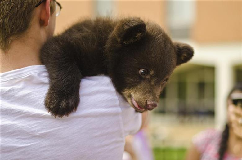 A two-month-old bear cub named Boo Boo is held by a student at Washington University in St. Louis, Missouri in this handout picture taken April 26, 2014. REUTERS/Mary Gail Richardson/Handout via Reuters