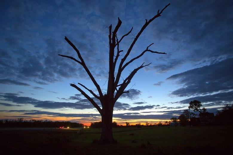An oak tree that has lost all its leaves and most of its branches from a tornado is pictured at sunset near Vilonia, Arkansas May 1, 2014. REUTERS/Carlo Allegri
