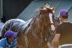 May 13, 2014; Baltimore, MD, USA; California Chrome is given a bath after his morning work  in preparation for the Preakness Stakes at Pimlico Race Course. Mandatory Credit: Tommy Gilligan-USA TODAY Sports
