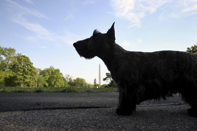 U.S. President George W. Bush's dog Miss Beazley awaits the president's arrival on the South Lawn of the White House in Washington May 1, 2007. REUTERS/Yuri Gripas