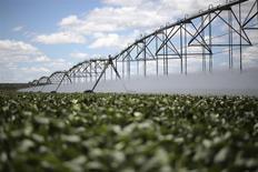 Una plantación de soja en Barreiras, Brasil, feb 6 2014. El presupuesto agrícola de Brasil en 2014/2015 subirá un 15 por ciento desde los 156.100 millones de reales (70.000 millones de dólares) del año pasado, dijo el lunes el Ministerio de Agricultura. REUTERS/Ueslei Marcelino