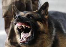 Imagen de archivo de un perro policial durante una manifestación a las afueras del estadio Mineirao en Belo Horizonte, Brasil, jun 22 2013. No compitió en ninguna eliminatoria, pero la experiencia de sus 15 integrantes en la detección de explosivos y narcóticos, clasificó directamente a Brasil a un grupo canino de la Policía de Colombia para apoyar la seguridad en el Mundial de fútbol. REUTERS/Sergio Moraes