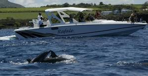 Tourists watch bottlenose dolphins in Tamarin Bay on the West coast of Mauritius  in a file photo. REUTERS/Darrin Zammit Lupi
