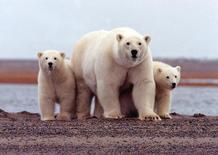 Foto de arquivo de urso polar no Alasca. 6 de marco de 2007.  REUTERS/Susanne Miller/USFWS/Divulgação