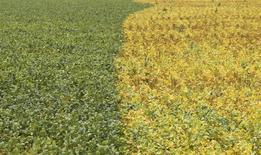 Plantação de soja no município de Primavera do Leste, no Mato Grosso. 7/02/2013. REUTERS/Paulo Whitaker