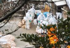 Funcionários da prefeitura de Miyazaki removem frangos em sacolas de uma fazenda onde casos de gripe aviária foram identificados, em Nobeoka, Japão. 16/12/2014. REUTERS/Kyodo