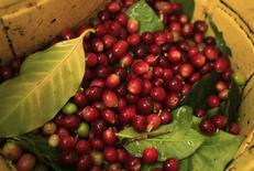 Granos de café recolectados en una cosecha en Villa Rica, Perú, jun 8 2012. La producción de café de Perú aumentaría en un 40 por ciento a 6 millones de quintales (sacos de 45 kilos) en el 2015, luego de tres años de caídas consecutivas debido a un hongo que afectó algunas cosechas, dijo el lunes la asociación más importante del sector en el país. REUTERS/Pilar Olivares