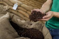 En la imagen, semillas de café molido en una hacienda en Maues, en el este de Manaus, Brasil. El Gobierno de Brasil estimó que la cosecha de café para este año sería similar a la del 2014, que estuvo golpeada por una sequía, y pronosticó un clima normal durante marzo, aliviando las preocupaciones por más pérdidas en el mayor productor mundial del grano. REUTERS/Bruno Kelly