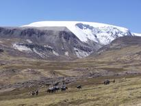 The north dome of the Quelccaya Ice Cap in Peru is seen in this handout photo from Ohio State University taken in 2003.  REUTERS/Paolo Gabrielli, courtesy of Ohio State University/Handout via Reuters