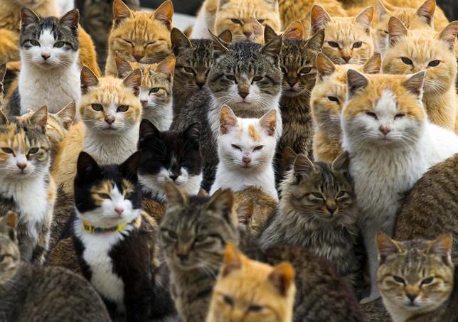 3月3日、愛媛県大洲市の沖合にある青島(あおしま)。ここには、島民わずか22人に対し、120匹以上の猫が暮らしている(2015年 ロイター/Thomas Peter)