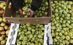 Яблоки на продуктовом рынке в Ставрополе. 7 марта 2015 года. Российские власти задумались о запрете на ввоз фруктов из Сербии, заподозрив ее в реэкспорте яблок из Польши, члена Евросоюза, импорт продовольствия откуда Москва ограничила в ответ на санкции Запада. REUTERS/Eduard Korniyenko
