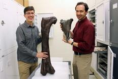 Christian Sidor, (R) Burke Museum curator of vertebrate paleontology, and Brandon Peecook, University of Washington graduate student, show the size and placement of the fossil fragment compared to the cast of a Daspletosaurusfemur, in this undated handout photo provided by The Burke Museum. REUTERS/The Burke Museum/Handout via Reuters