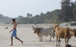 A tourist walks past cows on the beach in Cap Skirring, Senegal, May 5, 2015. REUTERS/David Lewis