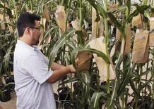 Centre de recherches de Monsanto à Chesterfield, dans le Missouri . Le numéro un mondial des semences a publié mercredi un bénéfice meilleur que prévu au titre du troisième trimestre et déclaré qu'il poursuivait son projet de rachat de son concurrent suisse Syngenta.  /Photo prise le 28 juillet 2014/REUTERS/Tom Gannam