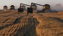 Cosechadoras trabajan en un campo de trigo, cerca de la villa de Talniki, Rusia, 27 de agosto de 2015. Rusia cosecharía 100 millones de toneladas de granos en peso limpio este año, una baja de 5 millones frente al volumen casi récord del año pasado, dijo el jueves el primer ministro del país, Dmitry Medvedev, en una reunión del Gobierno. REUTERS/Ilya Naymushin