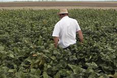 Homem em plantação de soja em Primavera do Leste, Mato Grosso.  07/02/2013   REUTERS/Paulo Whitaker